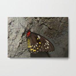 Birdwing Butterfly Metal Print