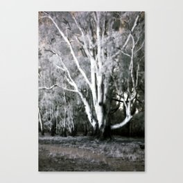 Old Man of the Forest Canvas Print