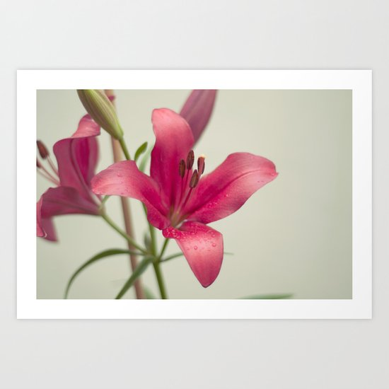 Morning Flower Art Print