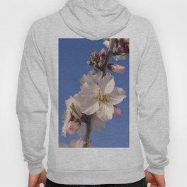 Almond blossom branch Hoody