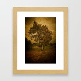 A Single Birch Tree Framed Art Print