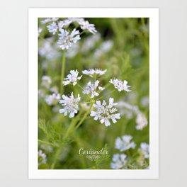 Coriander in flowers V Art Print