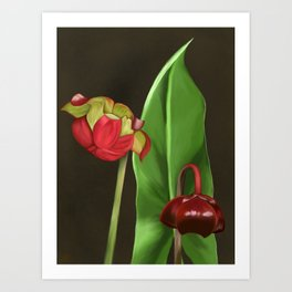 Pitcher Plant Flowers Art Print