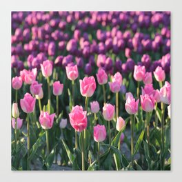 Purple and Pink Tulips Canvas Print