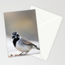 Black Chinned Sparrow-Barbara Chichester Stationery Cards