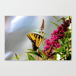 Butterfly Wonderland Canvas Print