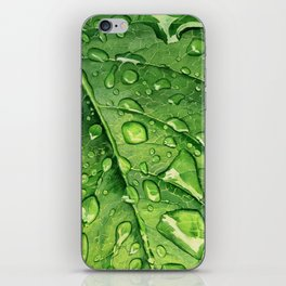 Green leaf with drops iPhone Skin