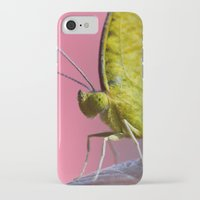 insect iPhone & iPod Cases featuring Insect by TJAguilar Photos