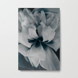 White peony 3 Metal Print