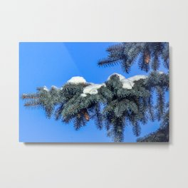 The branch of spruce and cones under snow Metal Print
