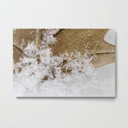 snowy leaf Metal Print