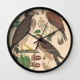 Rough legged Falcon Broad winged Hawk Sharp shinned Hawk9 Wall Clock