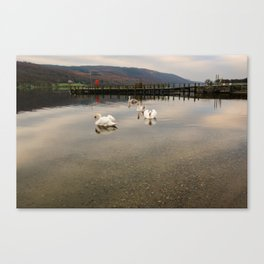 Coniston Water Swans Canvas Print