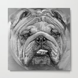 Bulldog Black and White Metal Print