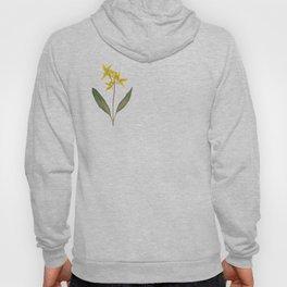 Glacier Lily - Yellow Mountain Wildflower Hoody