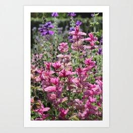 Bright Pink Salvia viridis Leaves Art Print