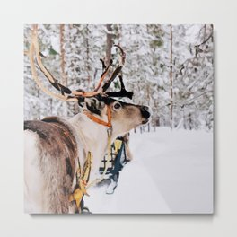 Winter animal Metal Print