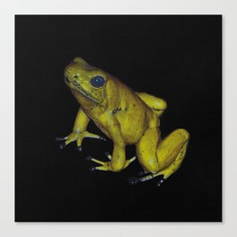 Golden Dart Frog Canvas Print