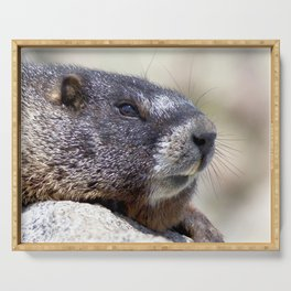 Watercolor Marmot 29, Forest Canyon Tundra, RMNP, Colorado, What's all the Commotion About? Serving Tray