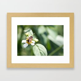Mind Your Beesnuss Framed Art Print