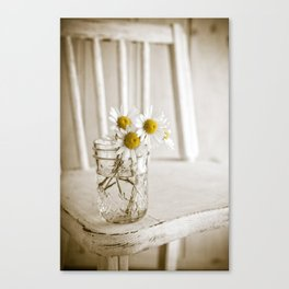 Simple White Daisy Flowers Canvas Print