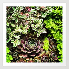 Hens & Chicks Art Print