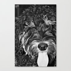 Scout... Canvas Print