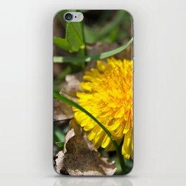 Lion's Roar iPhone Skin