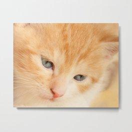 Kitten red Metal Print