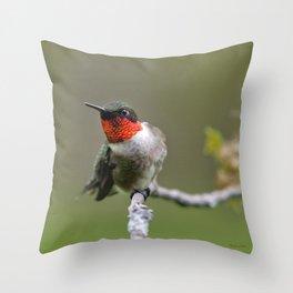 Hummingbird XII Throw Pillow