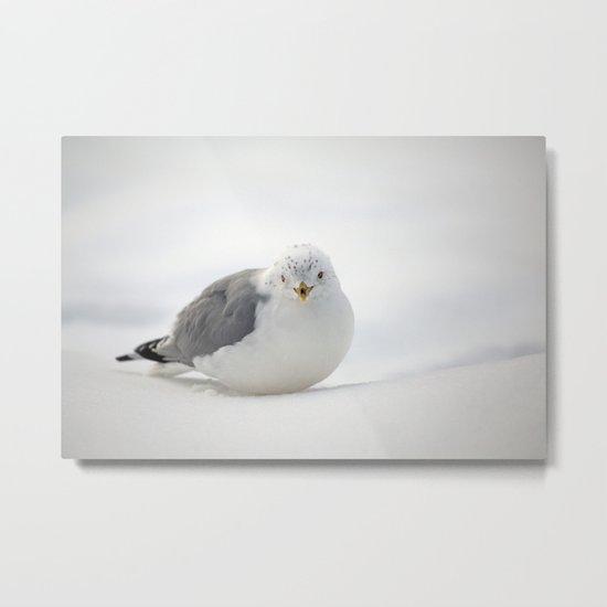 Snow Gull Metal Print