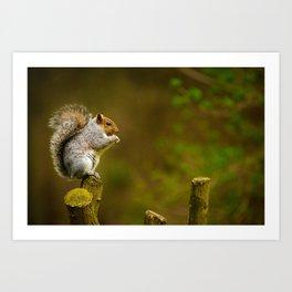 Cute Squirrel (Color) Art Print
