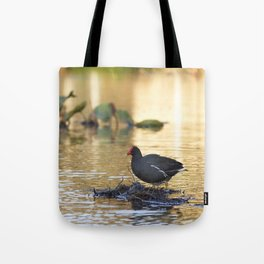 Birds from Pantanal Frango dagua Tote Bag