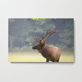 """""""Elk - Cataloochie Valley"""" Metal Print"""