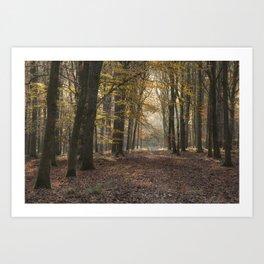 Towards the Sunlight Art Print