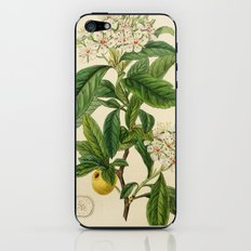 Edwards' botanical register 1836 iPhone & iPod Skin