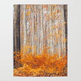 orange autumn Poster