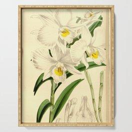 Dendrobium infundibulum Curtis' 90 (Ser. 3 no. 20) pl. 5446 (1864) Serving Tray