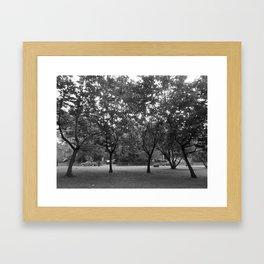 Chestnut Grove Framed Art Print