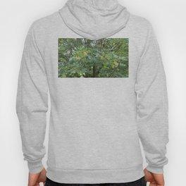 Big Leaf Maple  Hoody