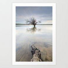 Roots and trees... Art Print