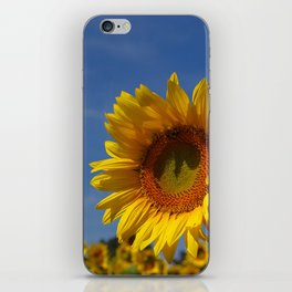 Sunny Summer Sunflower iPhone Skin