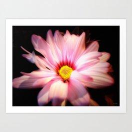 Pink Daisy 2 Art Print
