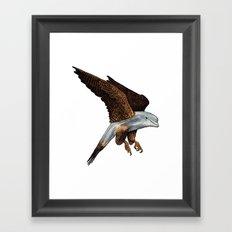 Peregrine Dolphin Framed Art Print