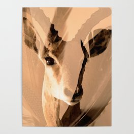 Beautiful and fast - Impala portrait Poster