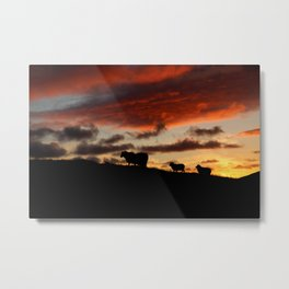 Midnight sun Icelandic sheep Metal Print