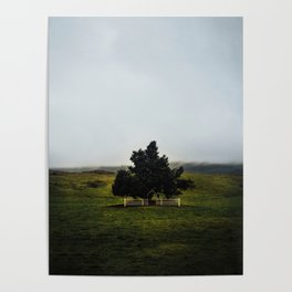 a lonely tree in iceland. Poster