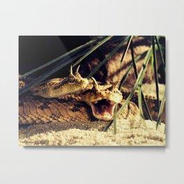 Desert Horned Viper- Snake Metal Print