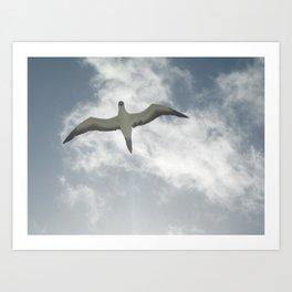 Misty bird Art Print