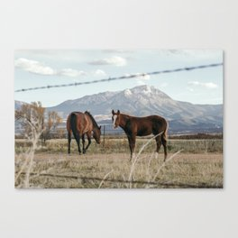 Ranch Horses near the Great Sand Dunes in Colorado Canvas Print